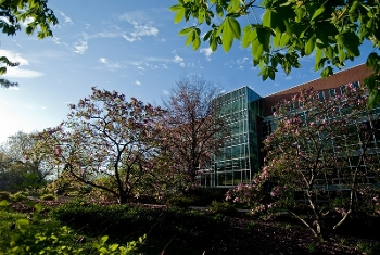 Michigan State University's main library in the spring